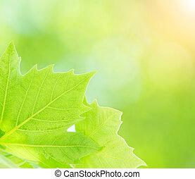 fresco, foglie, albero verde
