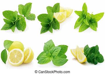 fresco, menta, limone