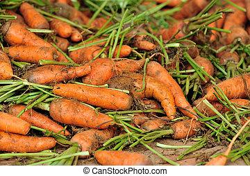 fresco, vendita, carote, mercato, locale