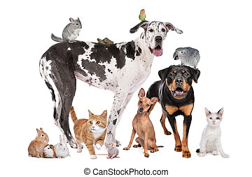 fronte, fondo, animali domestici, bianco