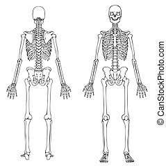 fronte, scheletro, indietro