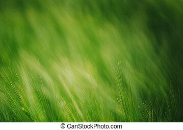 frumento, astratto, campo, sfondo verde, coltivato, agricolo