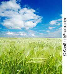 frumento, cielo, nuvoloso, campo, verde, sotto