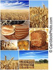 frumento, collage, :, raccogliere, bread