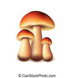 funghi, bianco, vettore, isolato, foresta