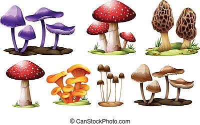 funghi, differente, tipi