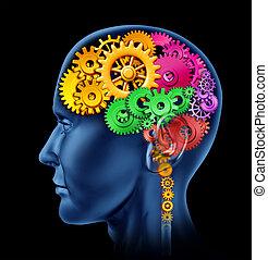 funzione, cervello