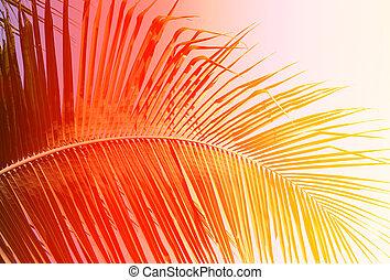 fuoco, foglia palma