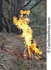 fuoco, nature., legno