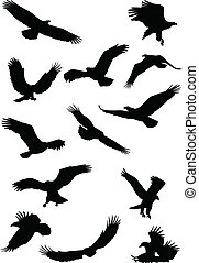 fying, silhouette aquila, uccello