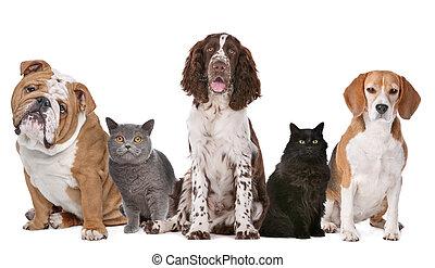 gatti, cani, gruppo