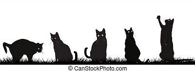 gatti, esterno, nero, gioco