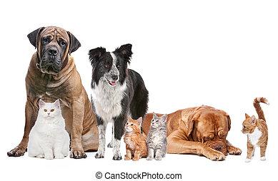 gatti, gruppo, cani