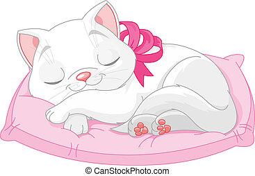 gatto, carino, bianco