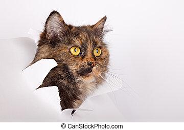 gatto, carta lacerata, buco, lato