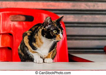 gatto, dire bugie, sedia, tavola., bianco rosso