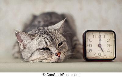 gatto, orologio