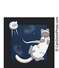 gatto, spazio