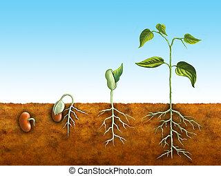 germinazione, seme