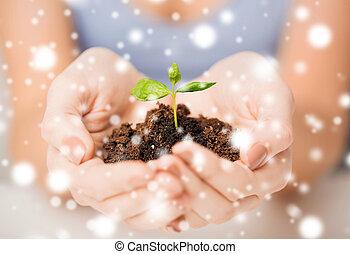 germoglio, suolo, verde, mani