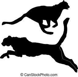 ghepardo, silhouette
