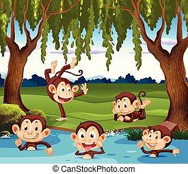 gioco, scimmia, natura