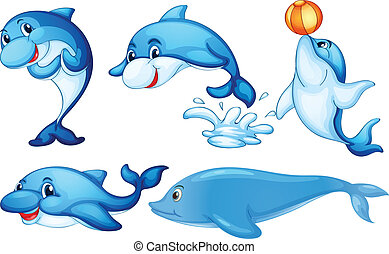 giocoso, delfini