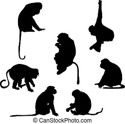 giocoso, silhouette, scimmia