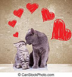 giorno, baciare, gatti, valentines
