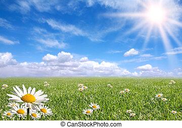 giorno, esterno, luminoso, felice, primavera
