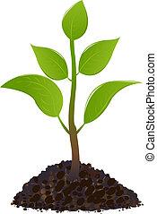 giovane, pianta verde