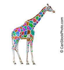 giraffa, colorito