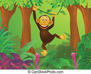 giungla, scimpanzé