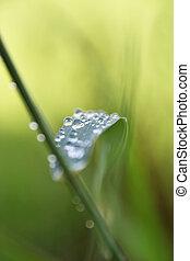 gocce acqua, foglia verde
