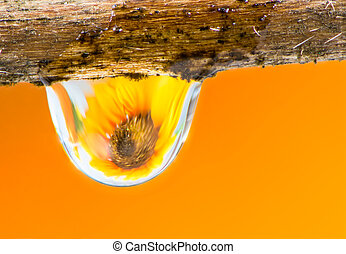 goccia di pioggia, fiore