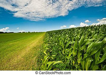 granaglie, estate, terreno coltivato