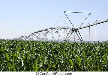 granaglie, irrigato