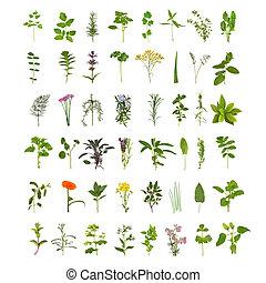 grande, erba, fiore, foglia, collezione