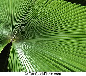 grande, foglia palma