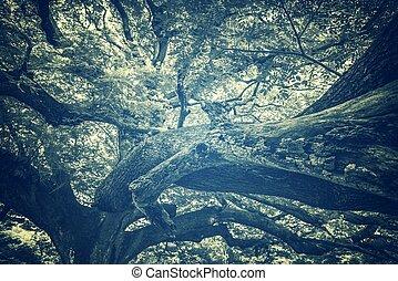 grande, immagine, filtro, albero, ramo, vendemmia