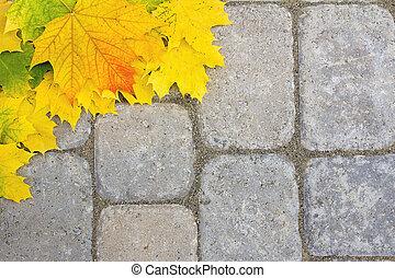 grande, lastricatore, foglie, patio, acero