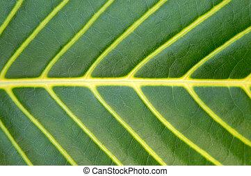 grande, pianta, foglia, verde, macro