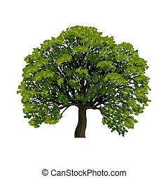 grande, simbolo, vettore, albero verde