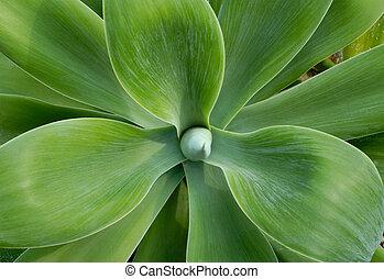 grandi foglie, cactus, primo piano