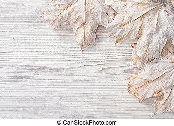 grunge, legno, sopra, autunno, fondo., bianco, foglie, acero