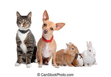 gruppo, animali domestici