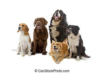 gruppo, cani