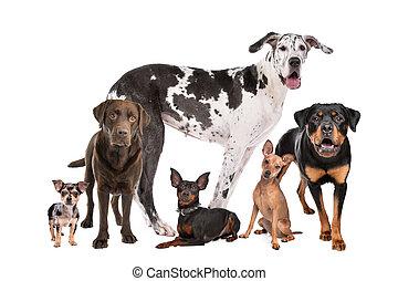 gruppo, cani, grande