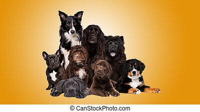 gruppo, cani, macchina fotografica, dall'aspetto, otto