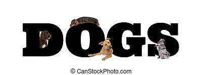 gruppo, cani, quattro, lettere, intorno, nero